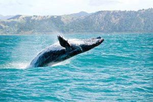 לוויתנים וחיות ים אחרות באלסקה