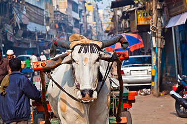 מומבאי המטורפת...