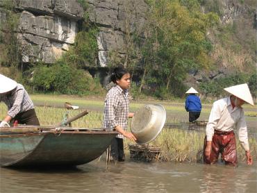 עבודת אדמה של חקלאים וויאטנמים