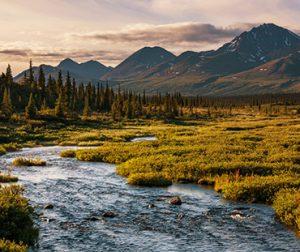 הנוף הפראי של אלסקה