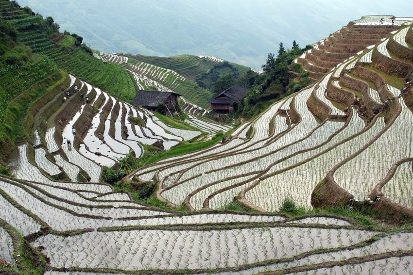 טראסות האורז שבסין