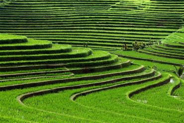 טראסות אורז שבארץ הטוראג'ה