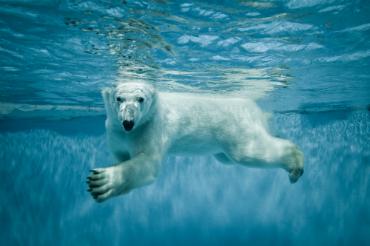 גן חיות ארקטי - חיות הצפון הנדירות