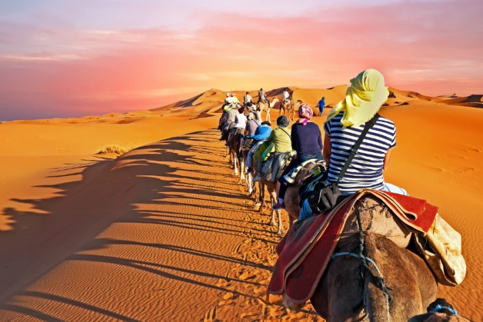 Camel caravan going through the desert in Morocco Africa at sunset