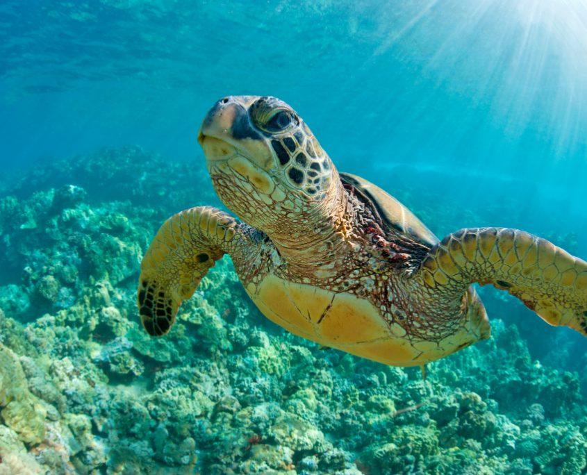 האי מואיין ומתחם צבי הים הענקיים